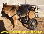 des photos et vid os de nos chariots pour chiens handicap s. Black Bedroom Furniture Sets. Home Design Ideas